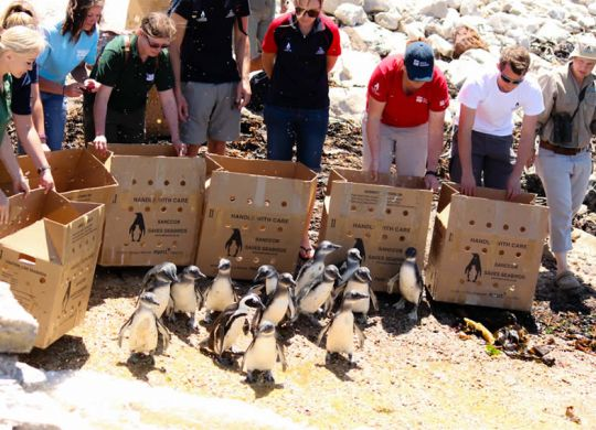 penguinrelease